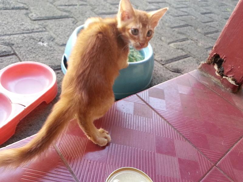 Cara Merawat Anak Kucing Persia Dengan Benar